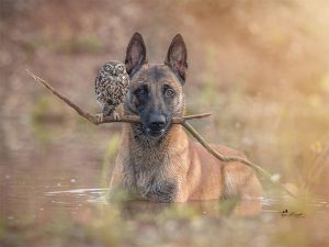A Dog and an Owl