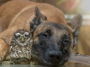 Unlikely friendship between an owl and a dog